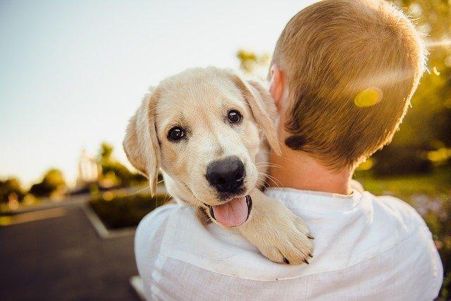 Назван лучший возраст щенка для покупки