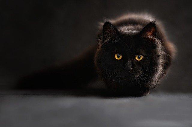 Часть крымского поселка закрыли на карантин из-за бешеной кошки