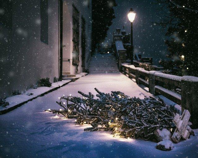 Севастопольцев приглашают сдать новогодние елки на корм осликам
