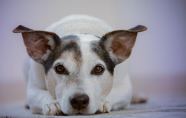 В Керчи бездомная собака укусила в глаз назойливую девушку