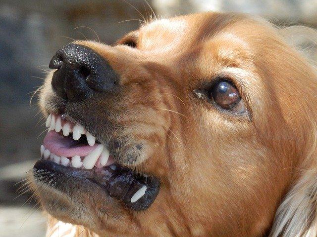 В Крыму собака напала и покусала ребенка и коз