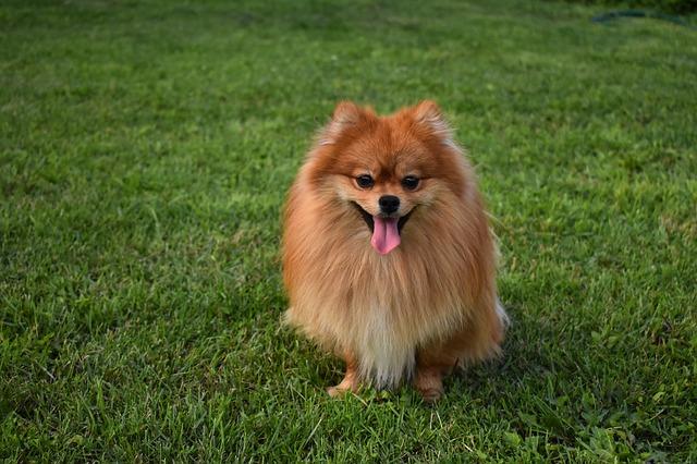 Крымчанин отправится в колонию за жестокое убийство собаки