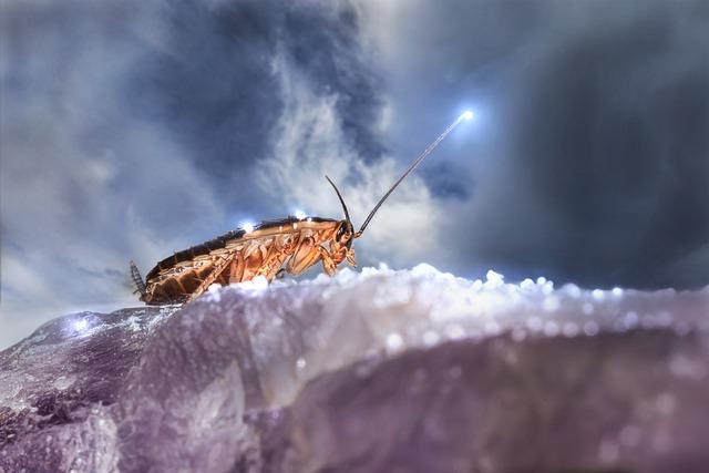 Эксперт назвал самый опасный вид бытовых насекомых