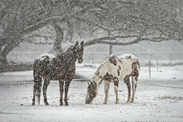 Две лошади провалились под лед в Крыму: одну спасти не удалось