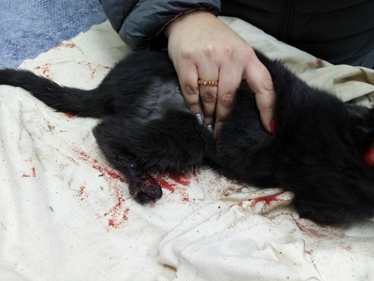 В севастопольском дворе спасали застрявшего в автомобиле котенка