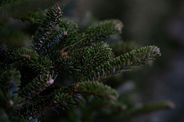 В Крыму переработают брошенные елки