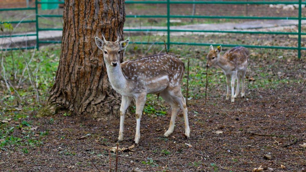 В зооуголке Симферополя появились новые животные (фото)