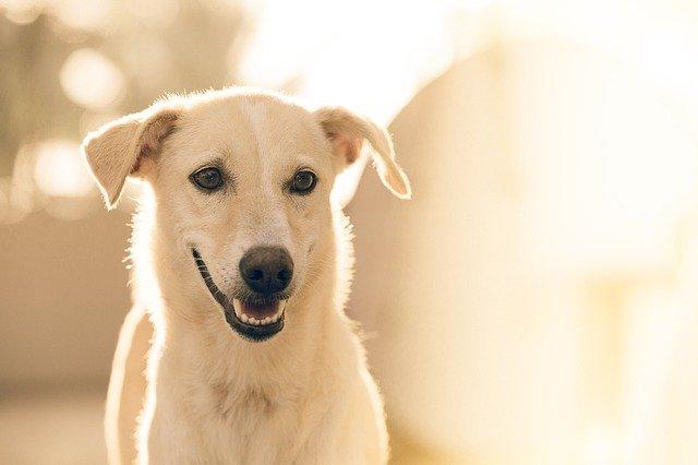 В Крыму собака изуродовала лицо девушки