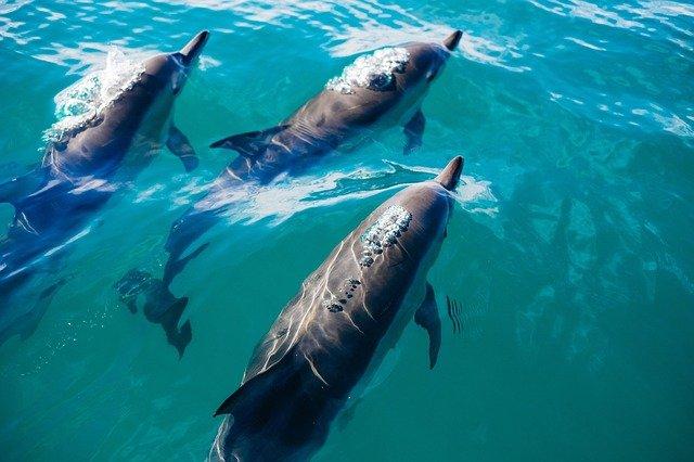 В России могут запретить вылов дельфинов для дельфинариев