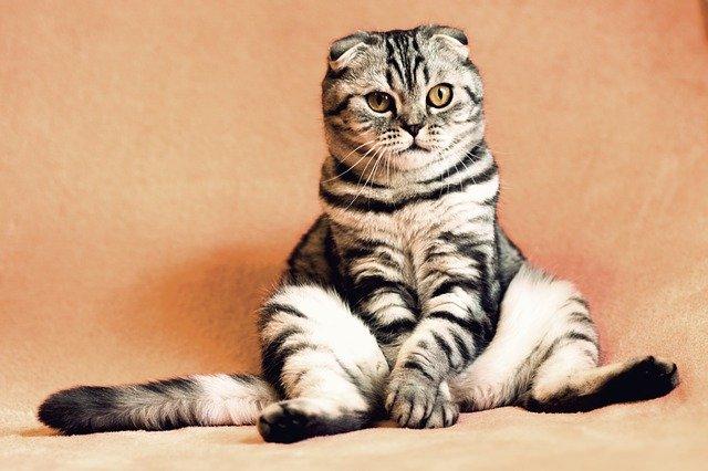 В Крыму планируют создать парк кошек