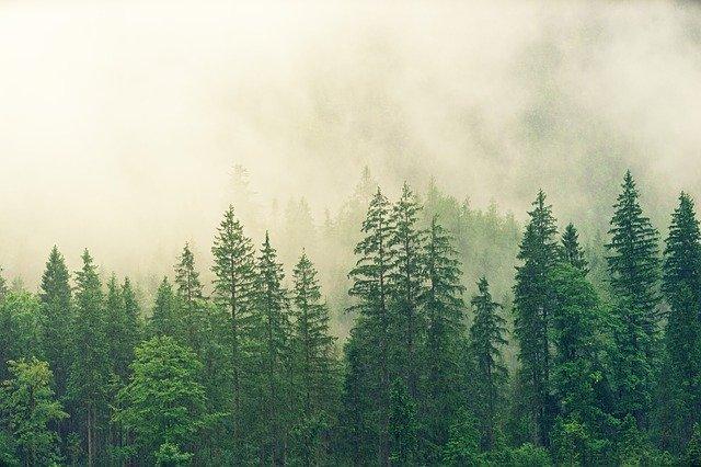 В Крымских лесах появятся новые места для отдыха