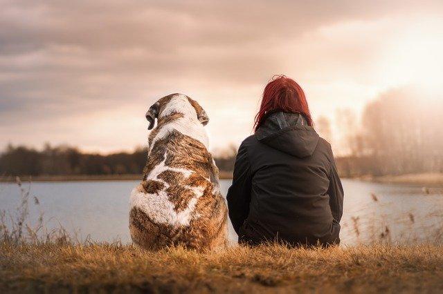 Крымский Хатико: собака с прошлого года ждет умершего хозяина