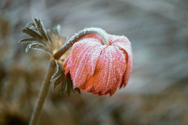 В среду в Крым вернутся аномальные морозы