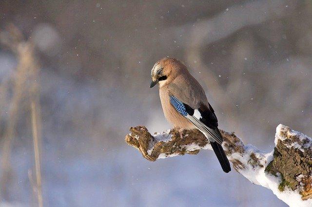 В Крыму и Севастополе 25 февраля будет прохладно (прогноз погоды)