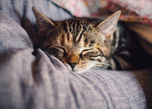 Стало известно, о чем говорит желание спать днем