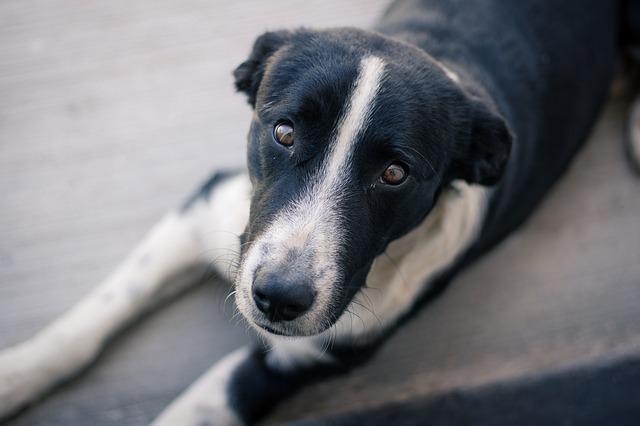 Полиция ищет убийцу бездомных собак в Крыму