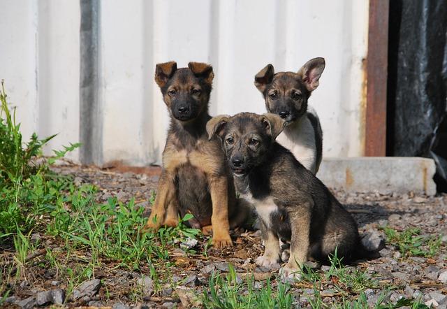 В Севастополе запустят службу для отлова бродячих собак