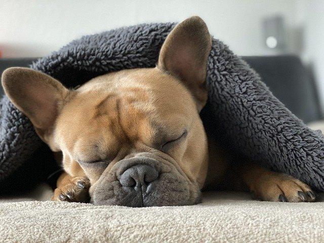 Сколько часов сна необходимо человеку для крепкого здоровья