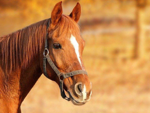 В Крыму будут судить организатора конной прогулки, на которой травмировалась туристка