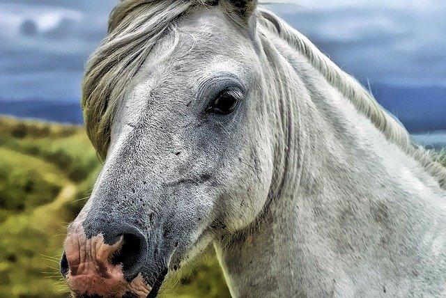 В Симферополе лошадь откусила палец 5-летней девочке