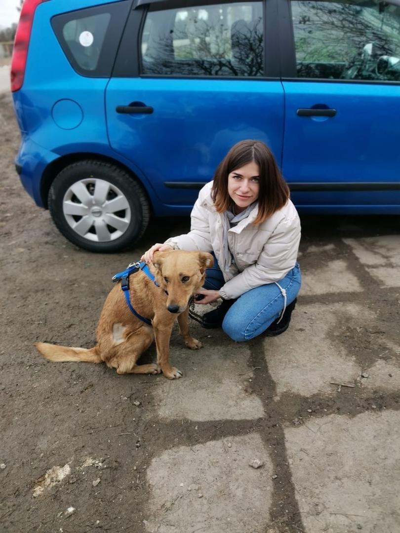 «Тащили за машиной, лужа крови»: в Крыму приютили изувеченную живодерами собаку