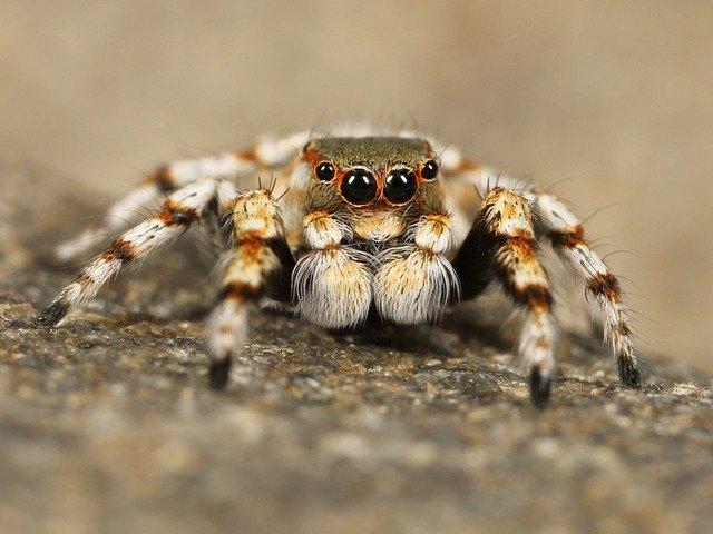 В Крыму проснулись опасные пауки