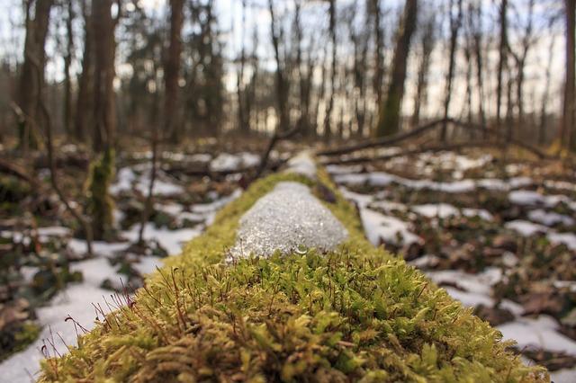Третий день весны в Крыму пройдет с мокрым снегом