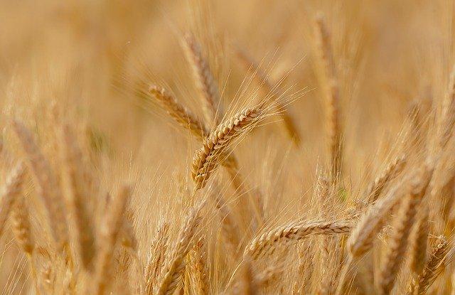 В какие страны Крым экспортирует вино и пшеницу