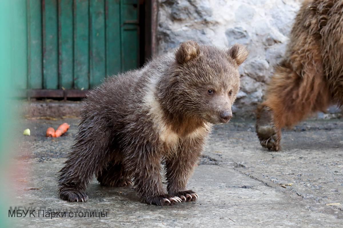 Наша Глаша: в зооуголке Симферополя впервые за 10 лет родился медвежонок (фото)