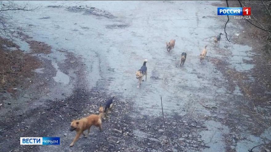 В лесах Крыма становится опасно: стая диких собак разорвала косулю