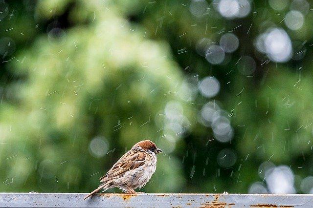 В Крыму до конца недели будут лить дожди