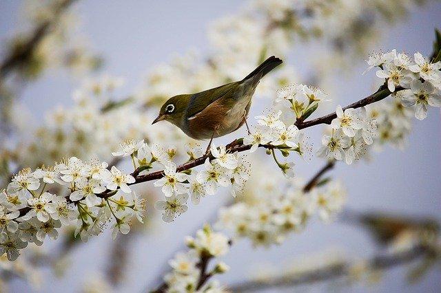 В Крыму 9 апреля сохранится прохладная погода