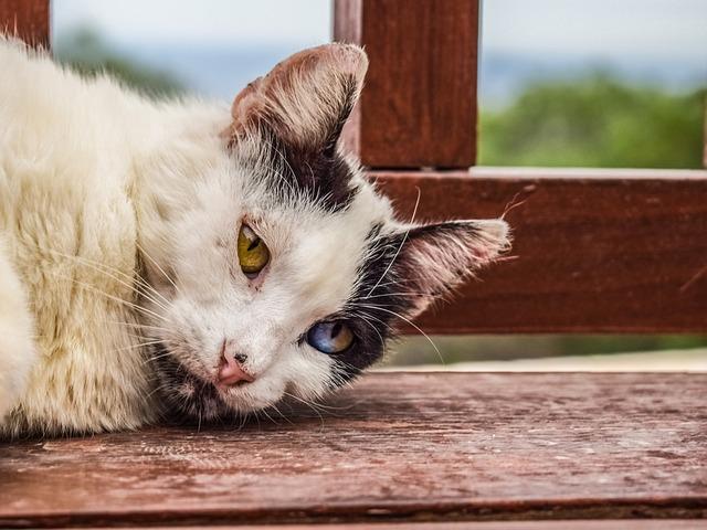 Начали поедать друг друга: россиянка на два месяца заперла в квартире 40 кошек