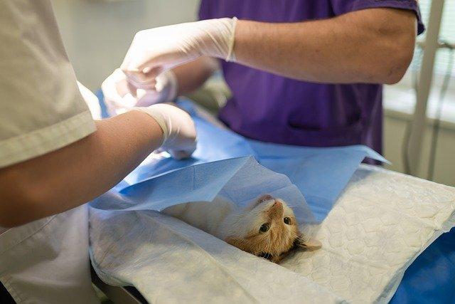 Крым получит вакцину от коронавируса для животных