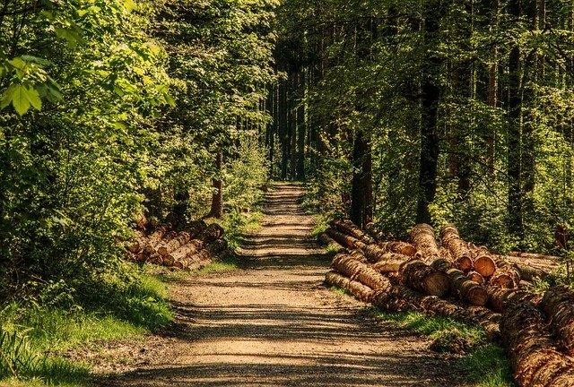 Крымчанам запретили ходить в леса на майские праздники