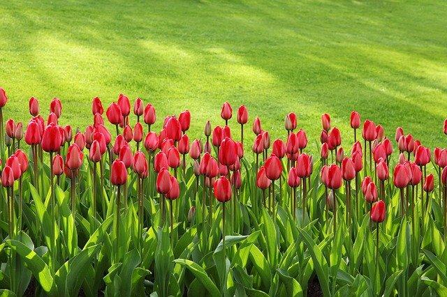 В Севастополе высадили 300 тысяч цветов