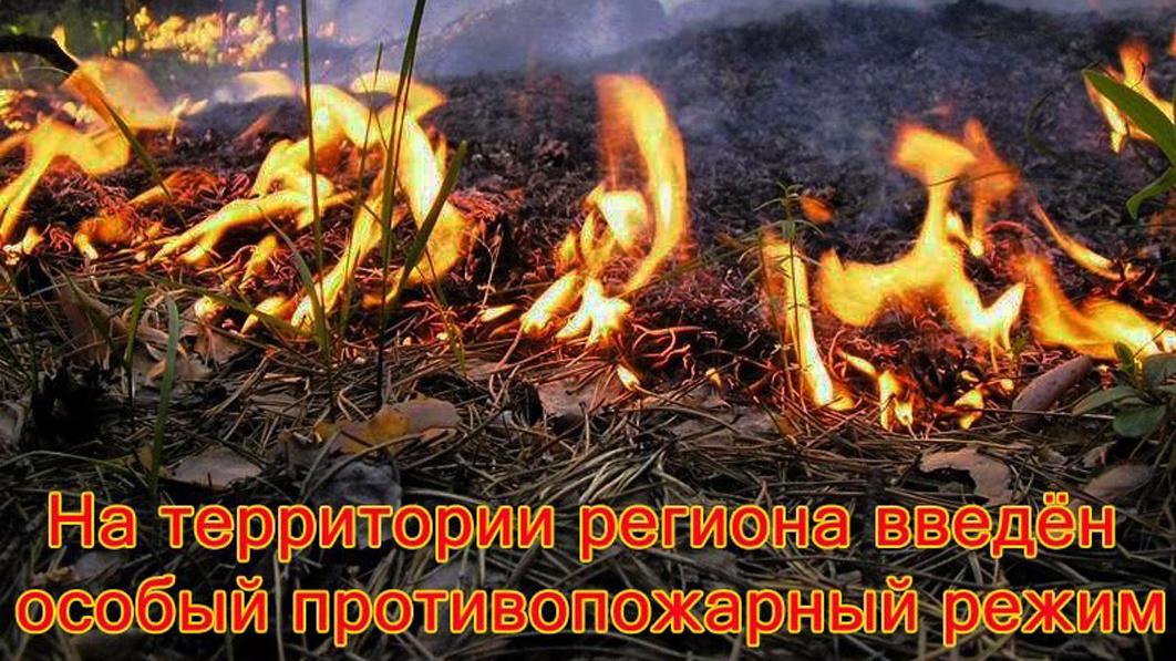 В Крыму ввели противопожарный режим