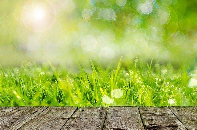 Горлов косит траву – пиар — траву на «бюджетной» поляне