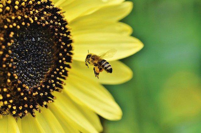 В Крыму насчитывают около 1,5 тысячи пчеловодов