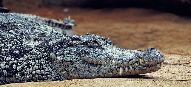 На берегу Азовского моря нашли труп крокодила (фото)