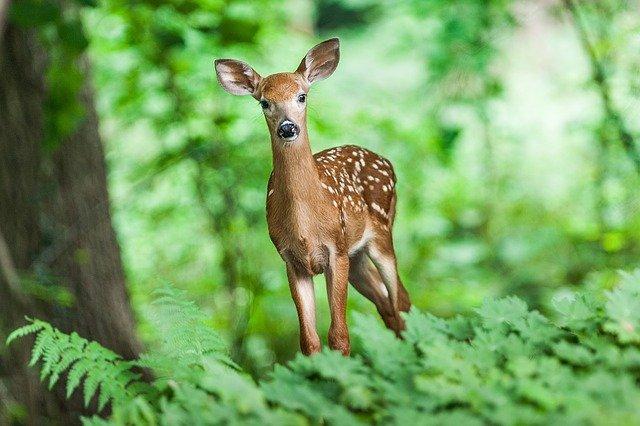 Что нужно знать крымчанам при посещении леса — МЧС