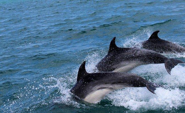 В Крыму находят мертвых дельфинов с привязанными к телу камнями (видео)