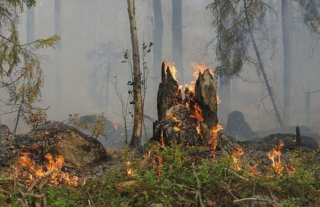 В Крыму до 14 мая объявлен режим чрезвычайной пожарной опасности