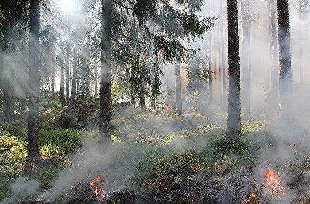 В Крыму ввели режим чрезвычайной пожарной опасности