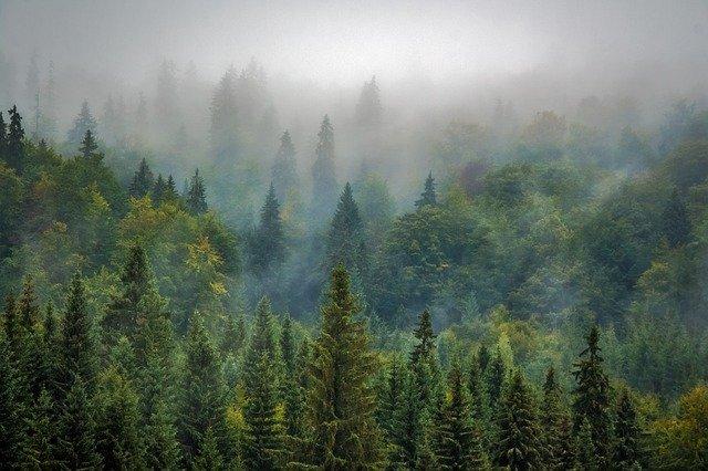 Жителям и гостям Крыма запретили посещать лес