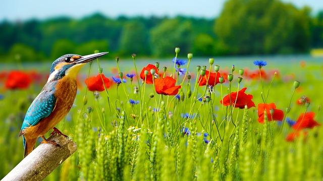 2 мая крымчан ждет теплая весенняя погода — Фобос