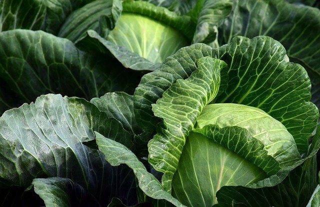 В Крыму подорожали свежие овощи