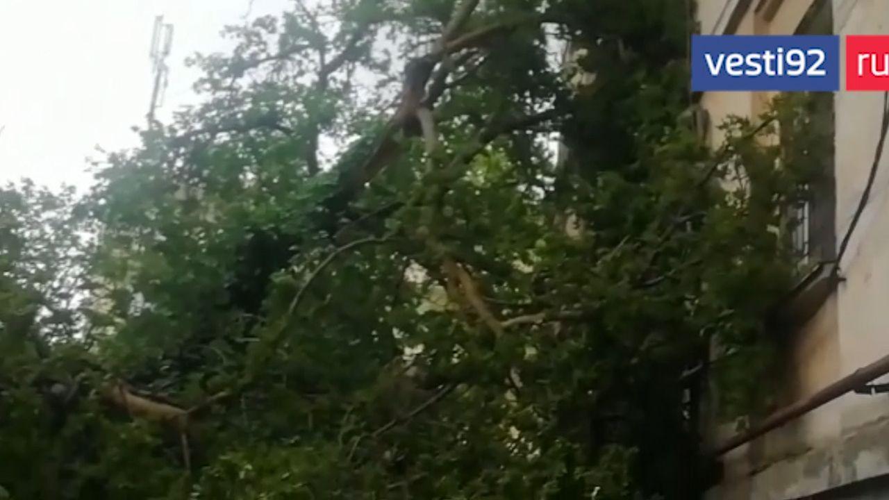 В Севастополе старое дерево рухнуло на дом, выбив стекла (видео)