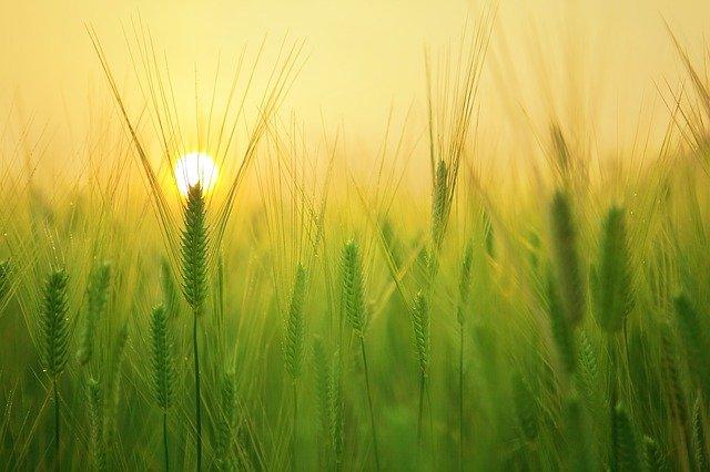 Крым экспортирует пшеницу и вино в 13 стран мира