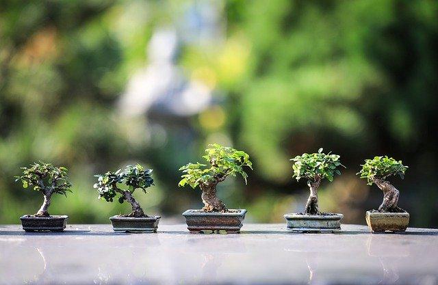 Жительница Севастополя выращивает у себя дома миниатюрный японский сад